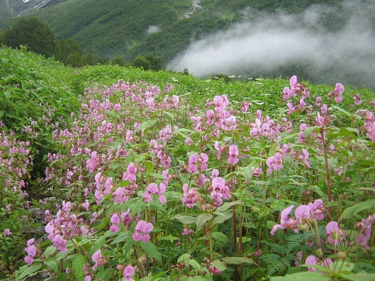Nanda Devi and Valley of Flowers National Parks, Uttarkhand, India