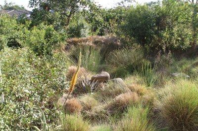 Natural Gardens | Emmarie Otto | Garden Brettenwood - storm water attenuation area