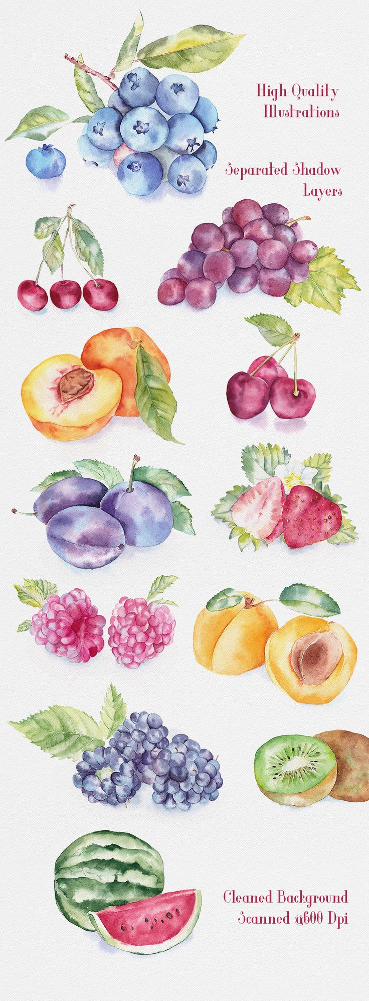Fruit Watercolor Illustrations by Emine Gayiran on Creative Market