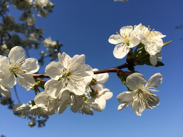 kwiaty, flowers by ILJANA EDYTA ŁABĘDZKA