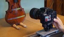 Dendrocronologia utilizada para datação de violinos e ... - Notícias - Naturlink