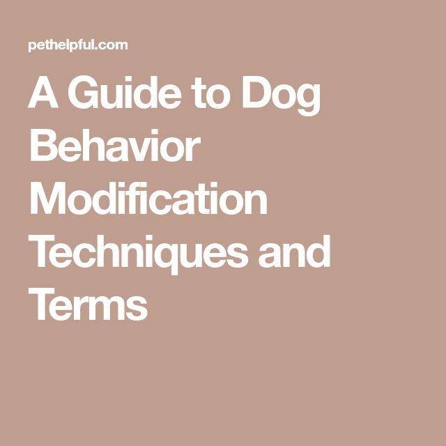 A Guide to Dog Behavior Modification Techniques and Terms