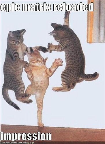 Funny cat pictures by Mdf1281, via FlickrDance Parties, Irish Dance, Lets Parties, Kitty Cat, Happy Dance, Lets Dance, Kung Fu, Cat Parties, Baby Cat