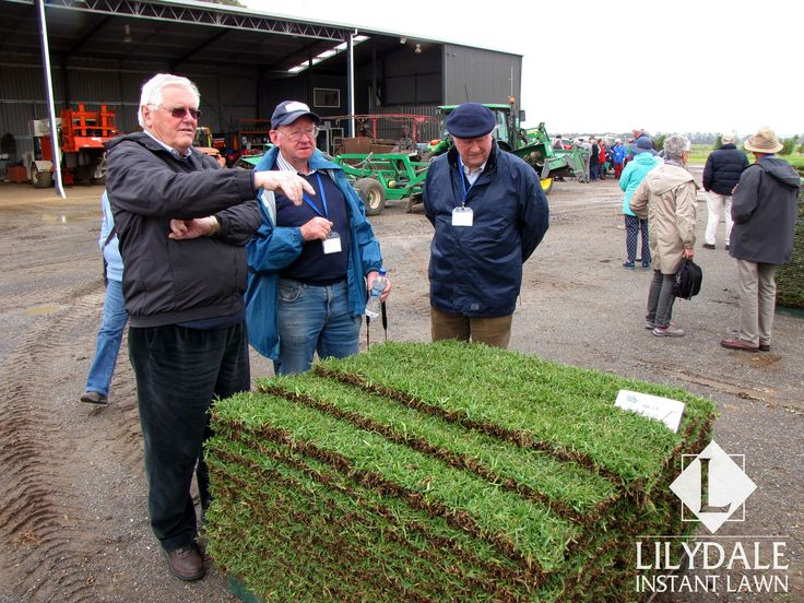Port Phillip Probus Club @ our Bairnsdale Farm - Lilydale Instant Lawn Care | Love your lawn | Great grass | Lily & Dale | Follow us | Garden Tips & Advice | Contact us | Lawn Solutions Australia  Lawn Supplier | Instant Turf |Sir Walter Buffalo DNA Certified | Lawn Solutions Australia | Online Store | Local Pick up & Delivery | Lawn Care | Turf Farm | Melbourne | Victoria | Garden