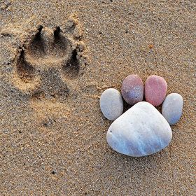 """""""Spot the Difference"""" photo by Iain Blake.  Love his pebble feet."""