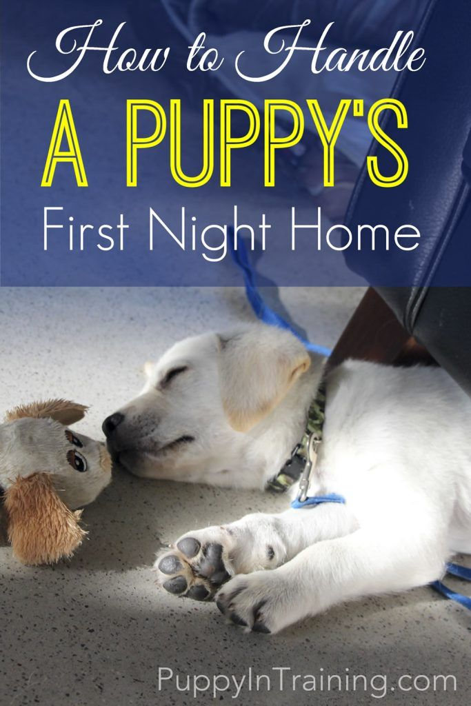 How To Handle A Puppy's First Night Home.  Bringing home a new puppy is very exciting.  We have some tips to get your through that first night at home with your new pup.