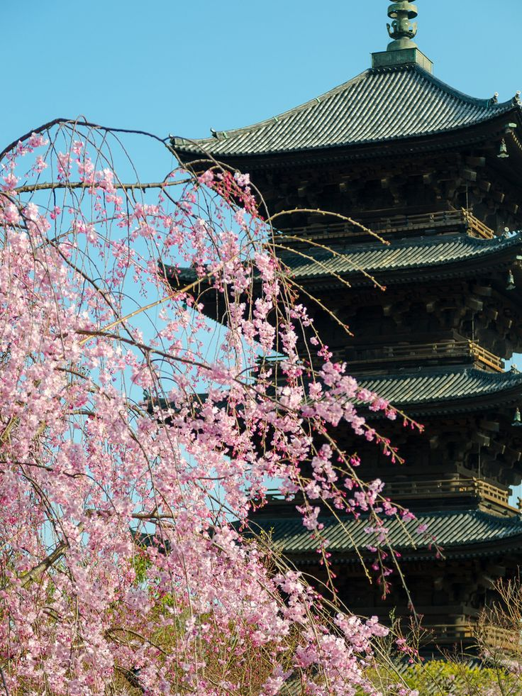 All sizes | 教王護国寺 八重紅枝垂れ桜 / To-ji Temple | Flickr - Photo Sharing!