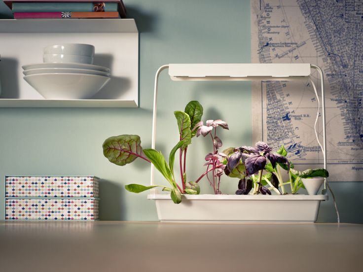 The Krydda/Växer line lets you plant herbs, lettuce, bok choy, and chard in your kitchen.