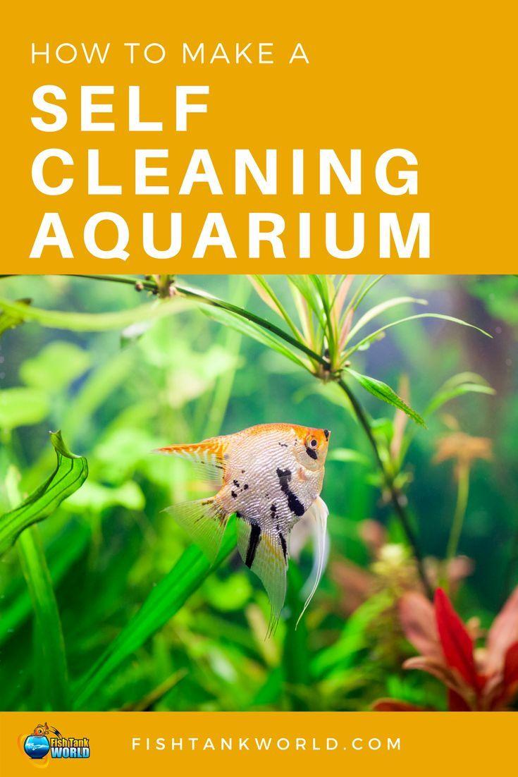 Self Cleaning Aquarium How To Make A Self Sustaining Aquarium In 2019 Self Cleaning Fish Tank Fish Tank Cleaning Fresh Water Fish Tank