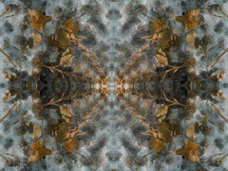 #thornappledreams #thornappleproductions #thornapple #mikeroutliffe #reflections #myth #neomythic #fractals #tracers #multipliers #composite #compositephotography #speculativefiction #cyberpunk #futuristic #futurism #avantegarde #contemporaryart #digitalarts  #graphics #biomech #newmediaart #newmediaartists #cyberbetics #artaesthetics #concept #psychedelicart #multimedia #transmedia
