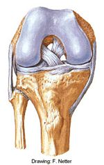 Dr Vladimir Bobic's site. Not very detailed, but a good spread of knee topics.