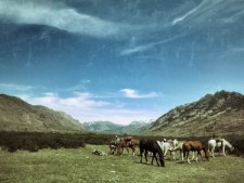 Lunch break for humans and horses
