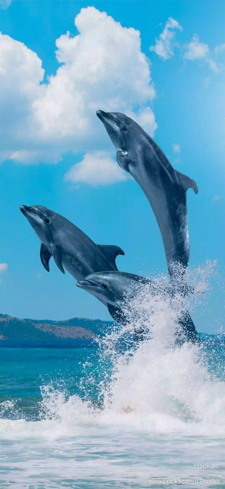 Lumba-lumba : lumba-lumba, Lumba-lumba, Animals, Beautiful,, Ocean, Animals,, World