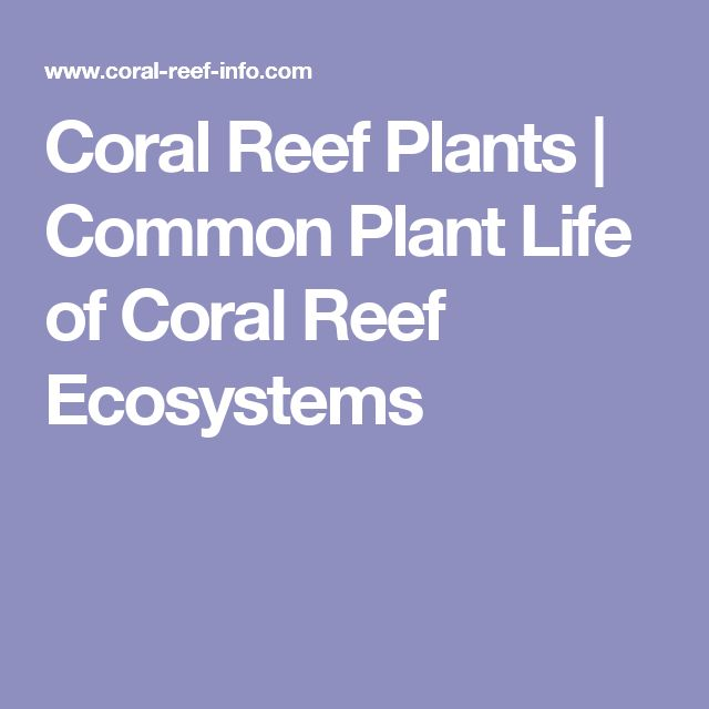 Coral Reef Plants | Common Plant Life of Coral Reef Ecosystems