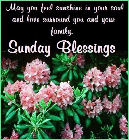 GOOD MORNING! HAPPY SUNDAY! #goodmorning #goodmorningpost #gmw #gm #happysundays #happysunday #happy #sundays #sunday #blessing #blessings #sundayblessings
