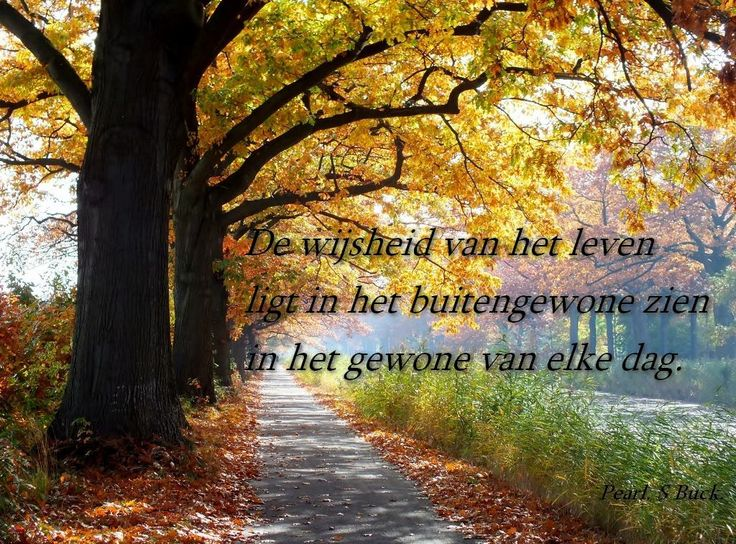 De wijsheid van het leven...