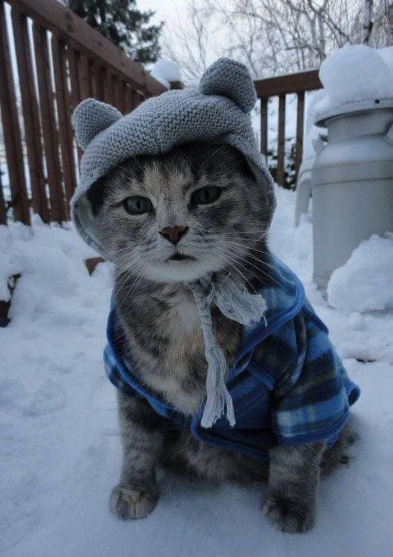 Холодно кошки картинки