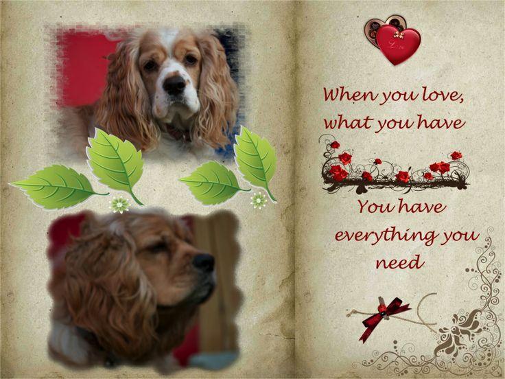 Love is.... When you love, Golden retriever, Animals