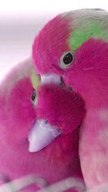 Soft pink white green ahhhhh  Cute True parrot´s