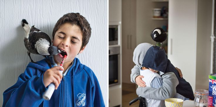 After tragedy struck, the Blooms struggled to recover. Taking in an injured magpie turned out to be just what the family needed to begin healing.