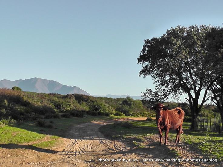 Manilva countryside