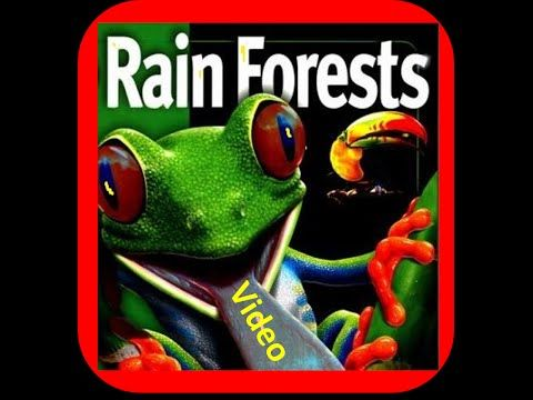 ▶ Rainforest for Kids - Biome Facts ,Layers,Animals,Flora - YouTube