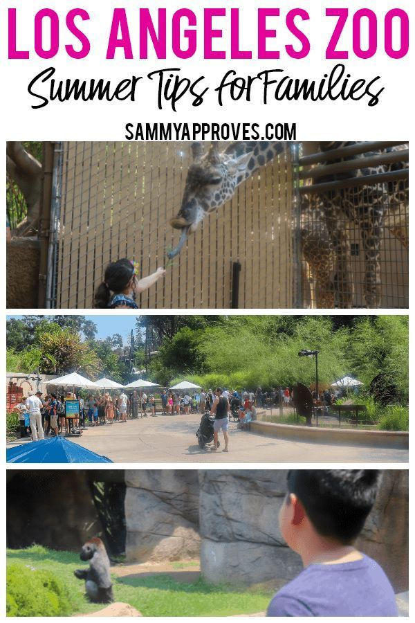 Los Angeles Zoo Summer Tips For Families Los Angeles Zoo Family Travel Destinations Family Travel
