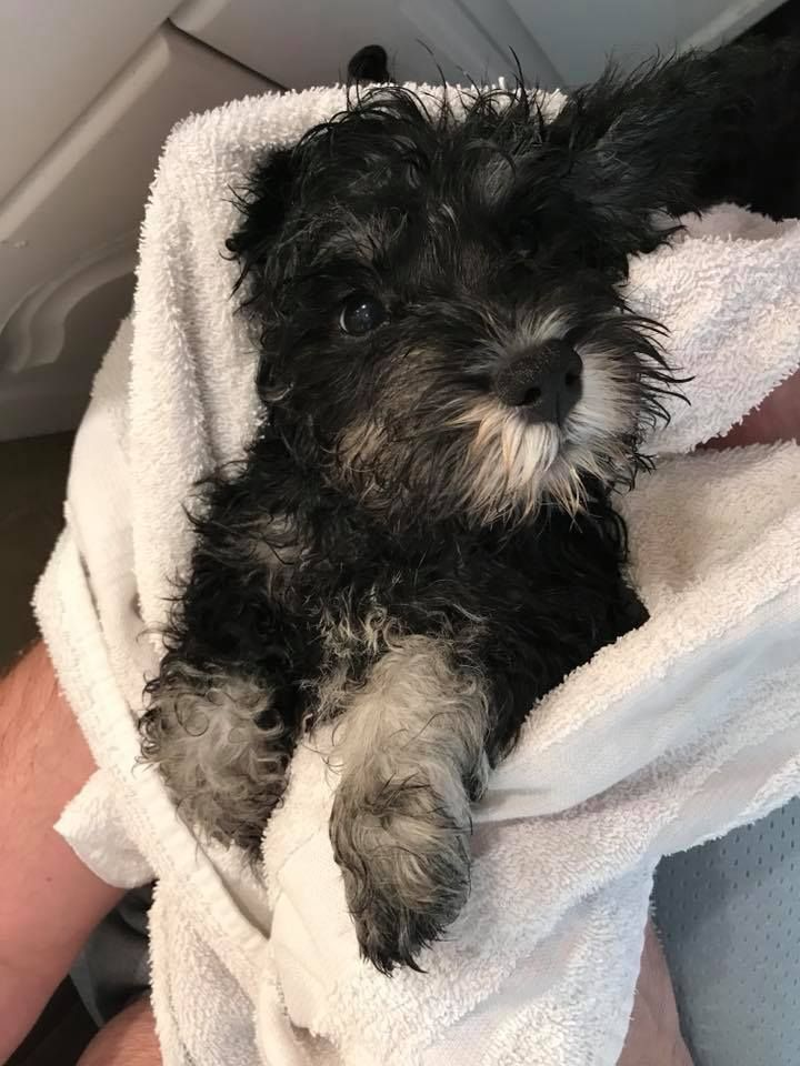 He Got A Bath And Now He Is On His Way To Join His New Family