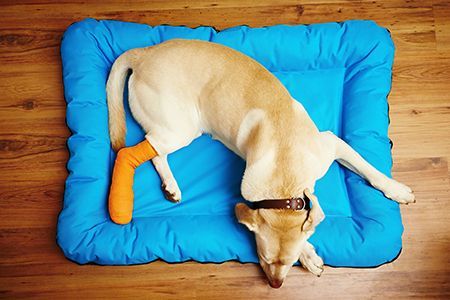 Sometimes it's hard to tell when your pet is hurting. They can't tell us where it hurts or even if it hurts. At Petsadena Animal Hospital, in Pasadena CA, we cherish the union you have with your pet. We take time to help you determine if your pet is in pain and then we will help find ways to manage that pain. Sometimes, the most effective method is with pet pain medication.   #Pasadena #Pets #PainManagement #Pain #Dogs #Cats #PetCare #California