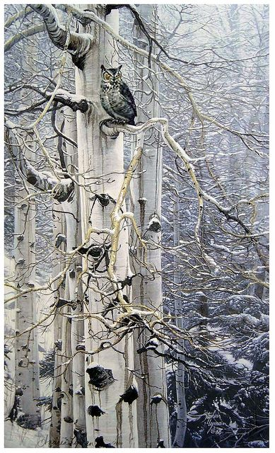 Winter Wood Shades  (Snowy White Birch Tree and Owl by Stephen Lymen)