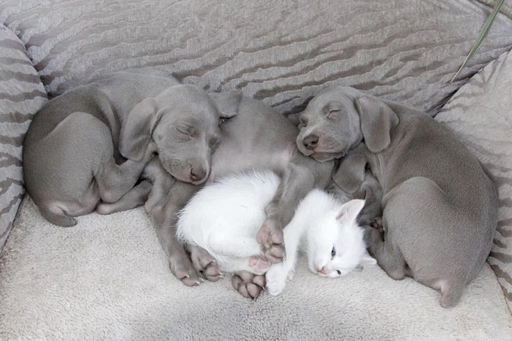 """cute-overload: """" They do love to cuddle. http://cute-overload.tumblr.com """""""