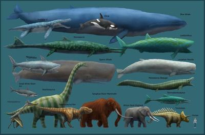 http://webclipart.about.com/od/msubmenu1ee/ss/The-Blue-Whale_4.htm