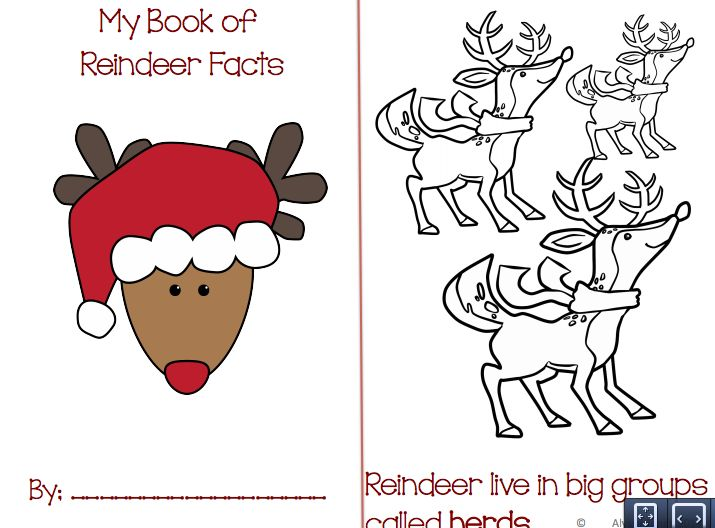 My  book of reindeer facts!