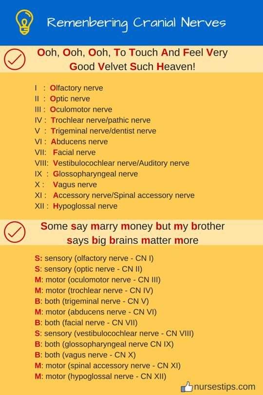 Remenbering Cranial Nerves