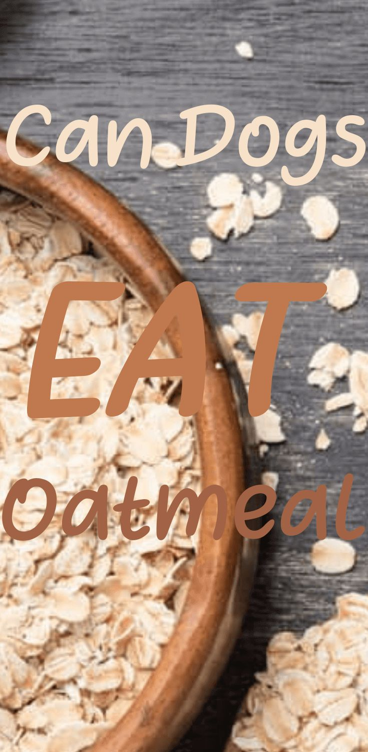 Can Dogs Eat Oatmeal? Here's What The Vet Says (With