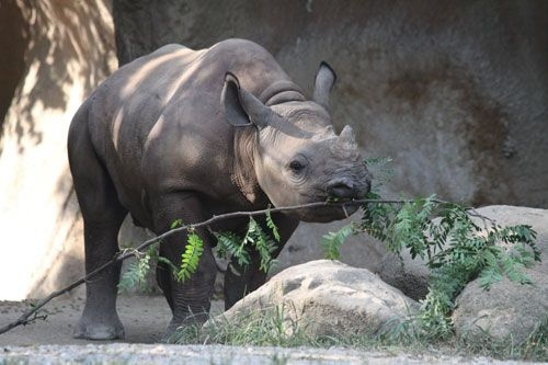 st louis zoo memorial day weekend