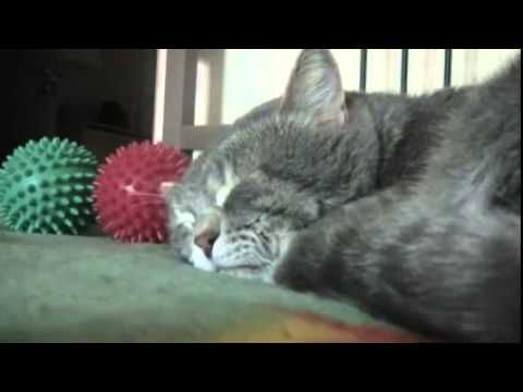 Someone coughs, the cat reacts:) Кот реагирует на кашель:) YouTubet