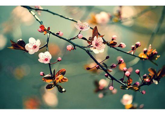 Fotobehang - Fotobehang Ontwakend Voorjaar