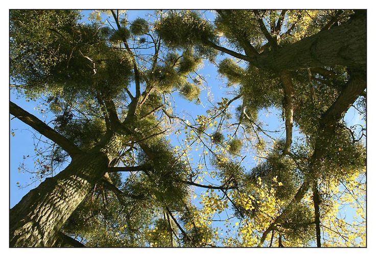 Auprès de mon arbre IV through the eyes of lasscor