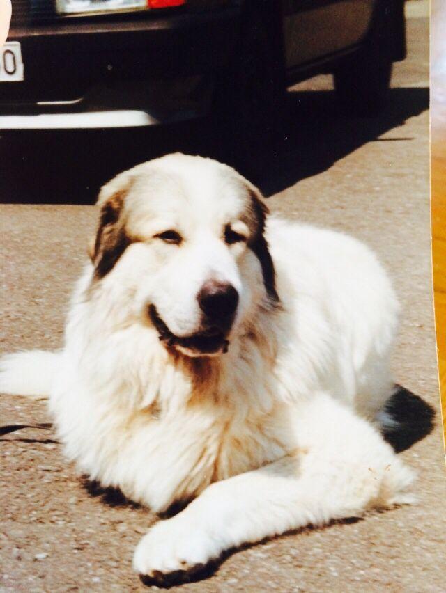75+ besten Hunde Bilder auf Pinterest | Anleitungen, Haustiere und ...