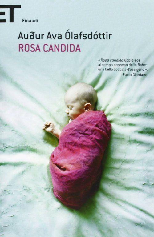 Rosa Candida