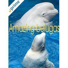Watch amazing beluga whales... https://www.amazon.com/dp/B075CJV6HB/ref=sr_1_7?s=instant-video&ie=UTF8&qid=1504524487&sr=1-7&keywords=enjoynaturevideo