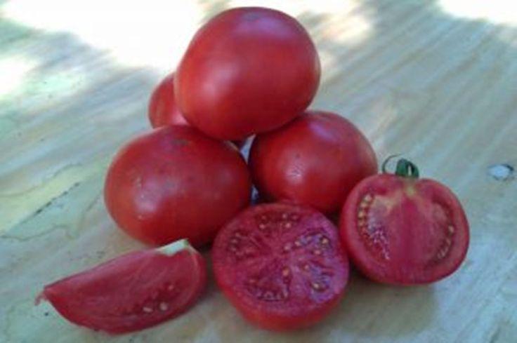 Seeds Tomato Asteroid Organic Ukrainian Heirloom Vegetable Seed | eBay
