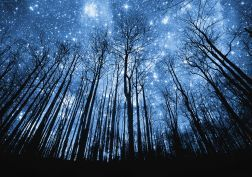 nature space sky trees forest hill mountaun silhouette stars manipulation cg…