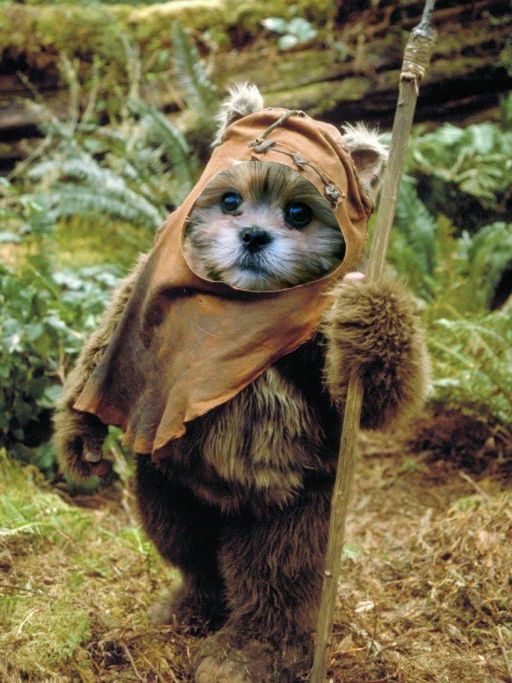best 25 ewok dog costume ideas on pinterest small dog costumes shih tzu and adorable puppies. Black Bedroom Furniture Sets. Home Design Ideas