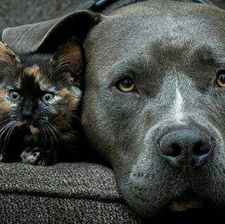 Friendship  Photo by @casey bebernes #About_animalslife