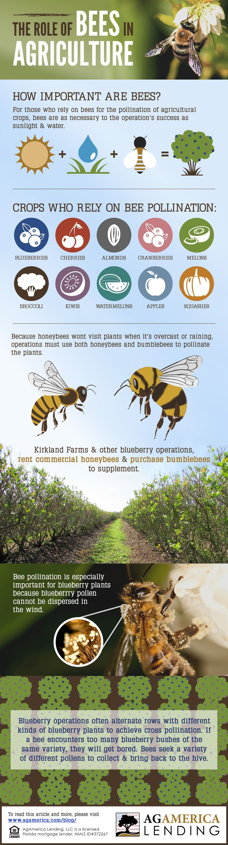 What's the Buzz: the Role of Bees in Agriculture.  Read the full article here: http://agamerica.com/whats-the-buzz-the-role-of-bees-in-agriculture/