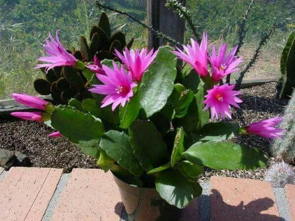 1 النباتات الزهرية علوم الخامس الابتدائي قراءة الدرس مع حل اسئلة الدرس Youtube