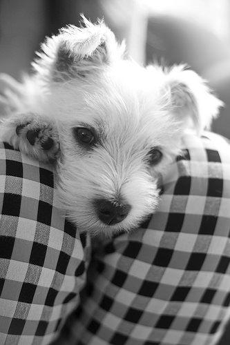 OLIVIA15 | Flickr - Photo Sharing!