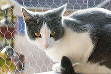 beautiful bicolor cat....